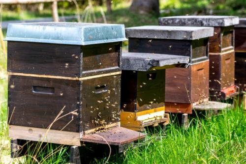 Beekeeping in Forstenrieder Park