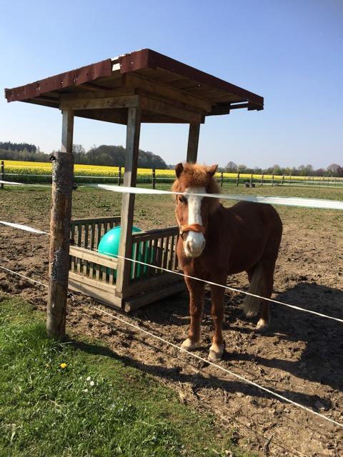 Resident Horse